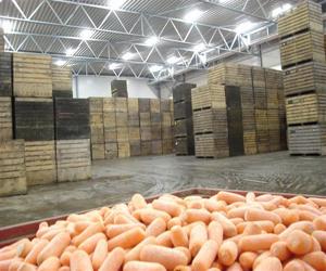 Инструкция По Хранению Овощей На Складах